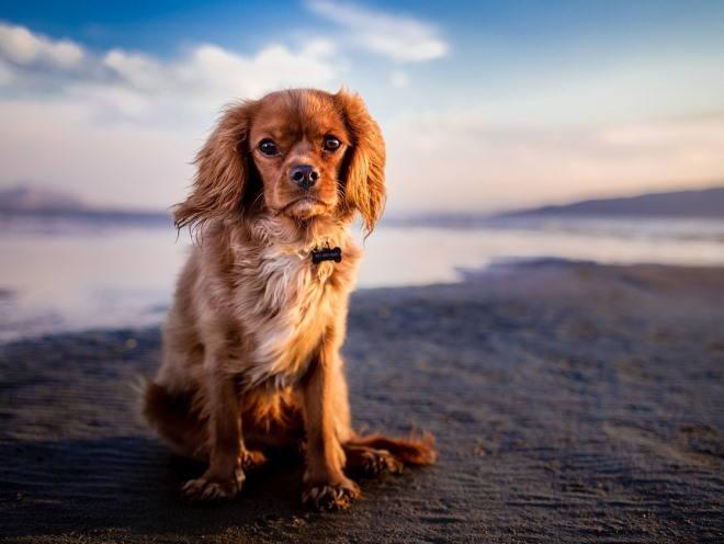 Собака сидит на берегу озера