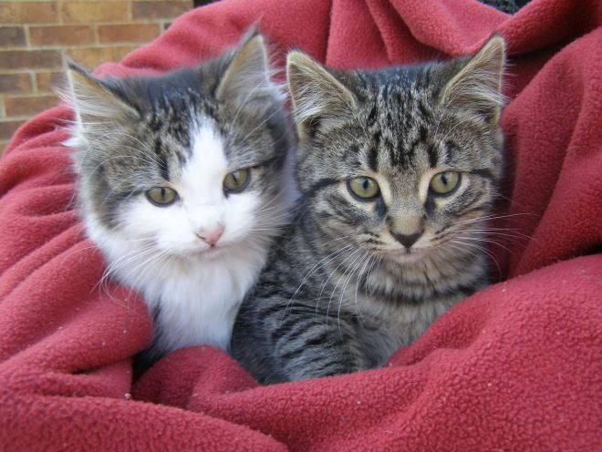 Котята греются под покрывалом