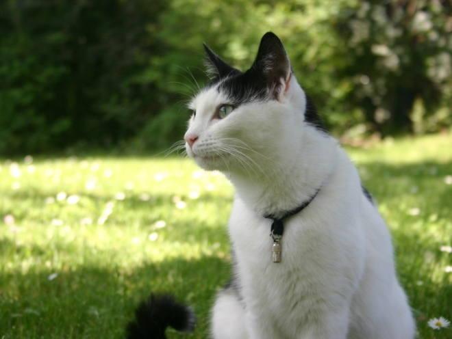 Кошка сидит на улице в тени