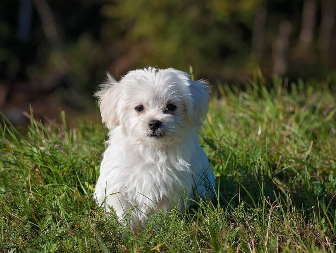Маленький пес сидит в траве