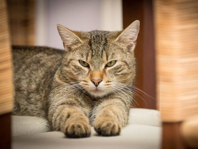 Кот лежит закатив глаза