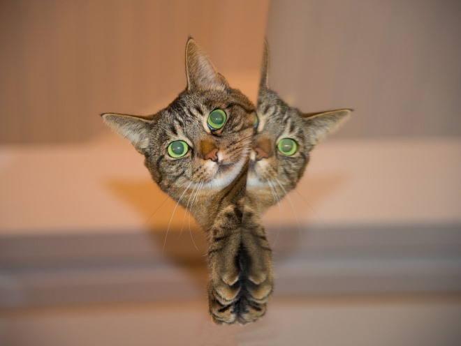 Кот выглянул и смотрит