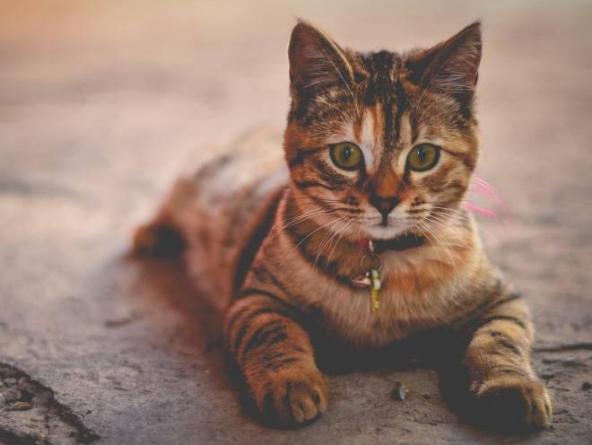 Котенок лежит на бетоне