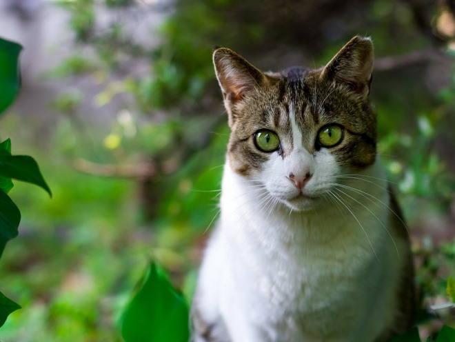 Кошка среди листьев