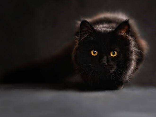 Кот затаился в темноте
