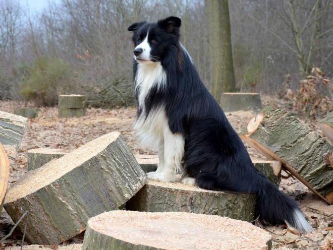 Собака сидит на лесной поляне