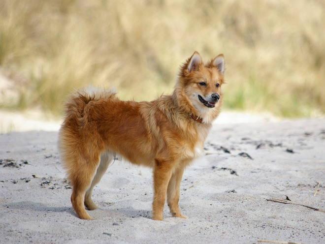 Собака гуляет у берега реки