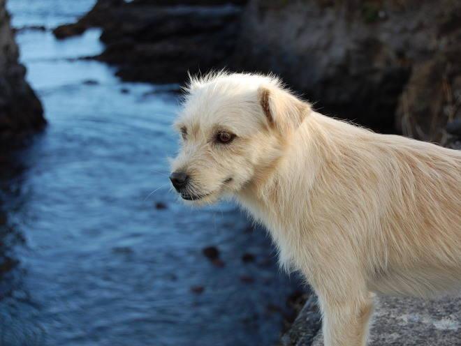Собака стоит у воды