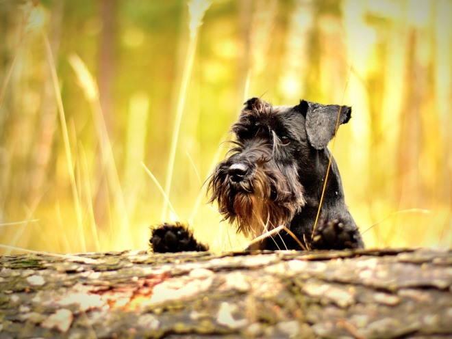 Собака гуляет в поле