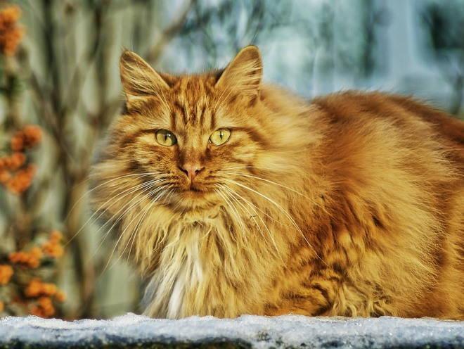 Кошка во время прогулки