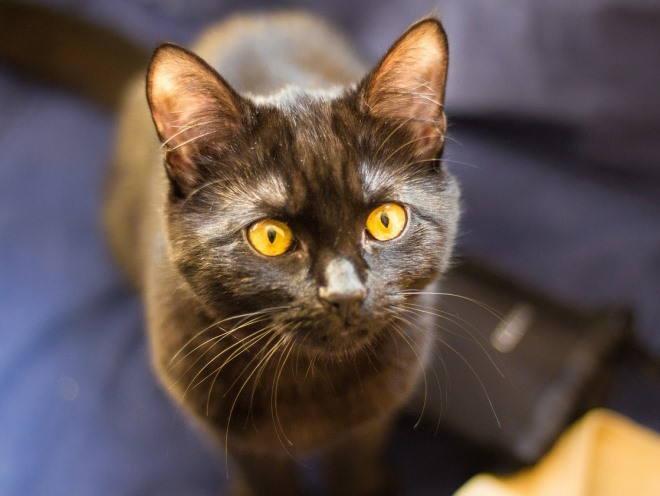 Кот сидит и смотрит