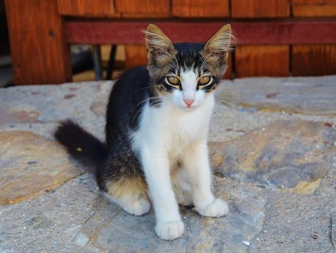 Котенок сидит у двери дома