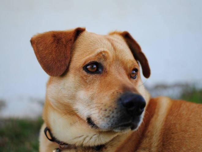 Собака смотрит с грустным видом