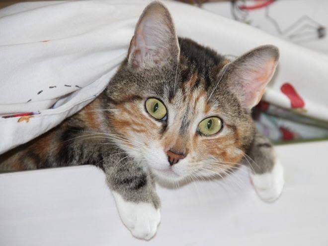 Беременная кошка на своей лежанке