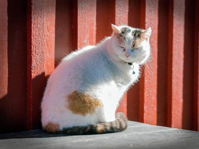 Кошка сидит на солнце