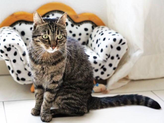 Кошка сидит в гостиной