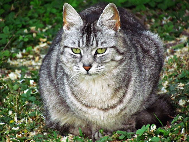 Кот сидит на лужайке
