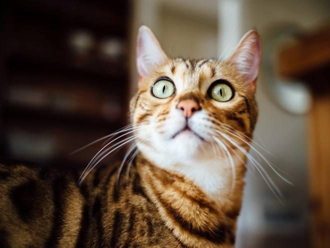 Кошка широко открыла глаза