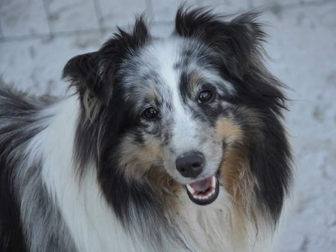 Собака во время прогулки