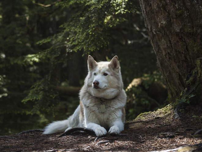 Собака лежит на земле под деревом
