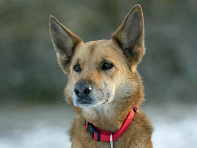Собака сидит и внимательно смотрит