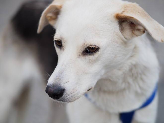 Собака смотрит грустным взглядом