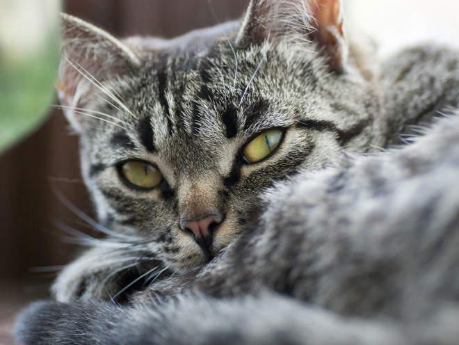 Кошка лежит свернувшись в клубок