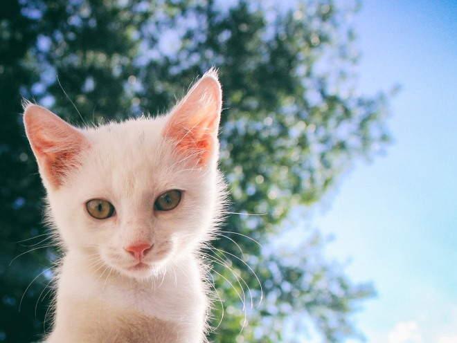Кошка на свежем воздухе