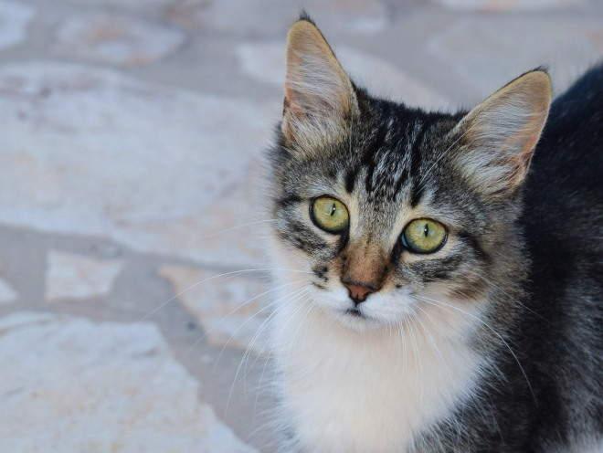 Кошка гуляет по улице