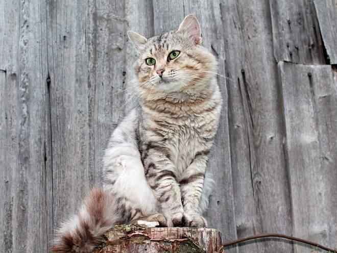 Кошка сидит на пне