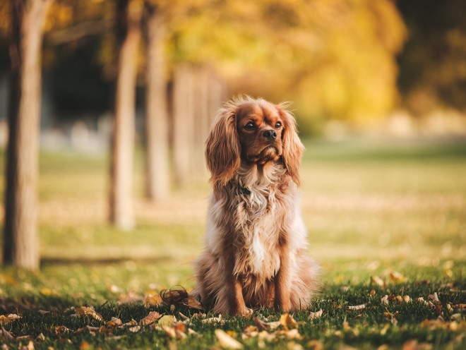 Собака в осеннем парке