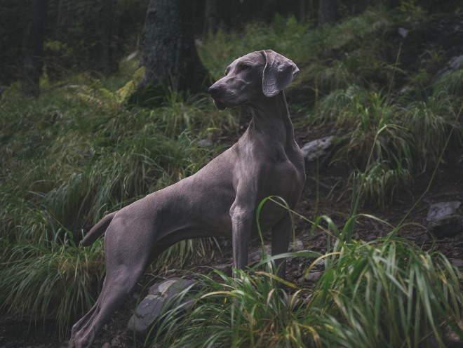 Собака бегает в лесу