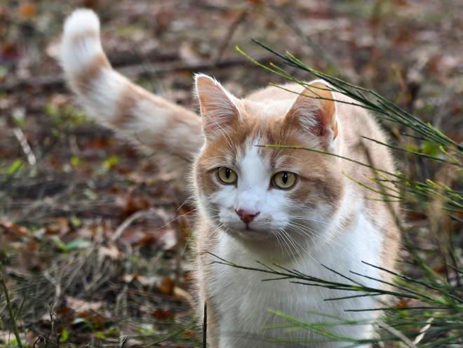 Кошка гуляет на природе