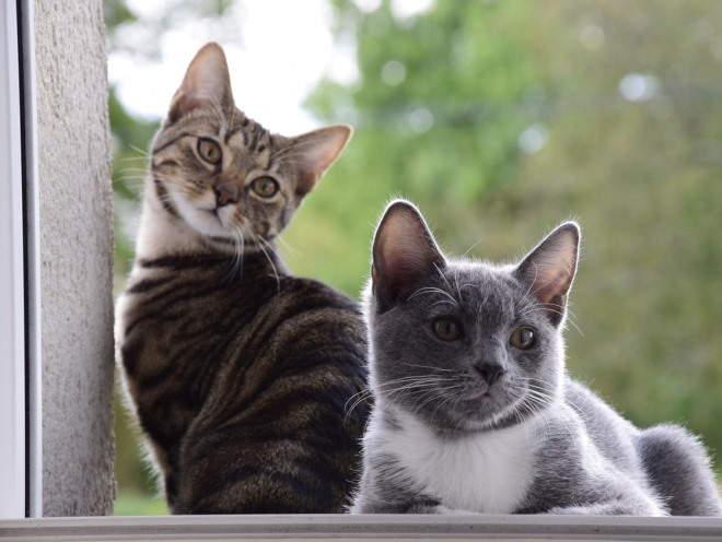 Кошки сидят у окна