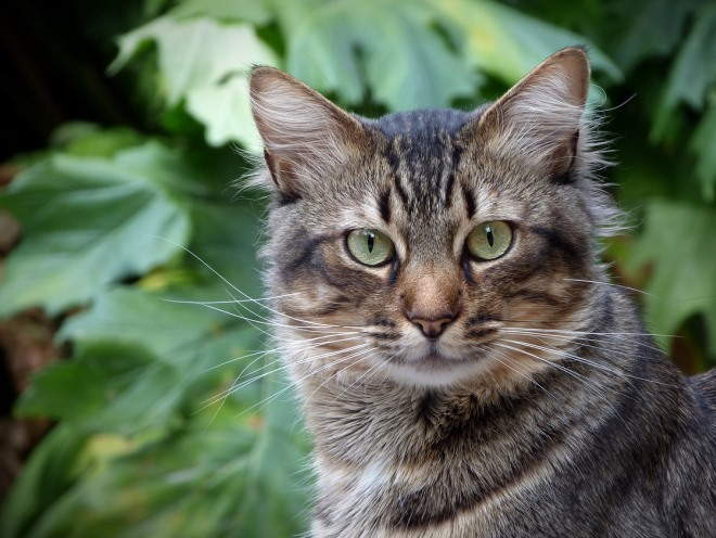 Лечение суставов британские кошки шелухина 13 сколько стоит узи коленного сустава