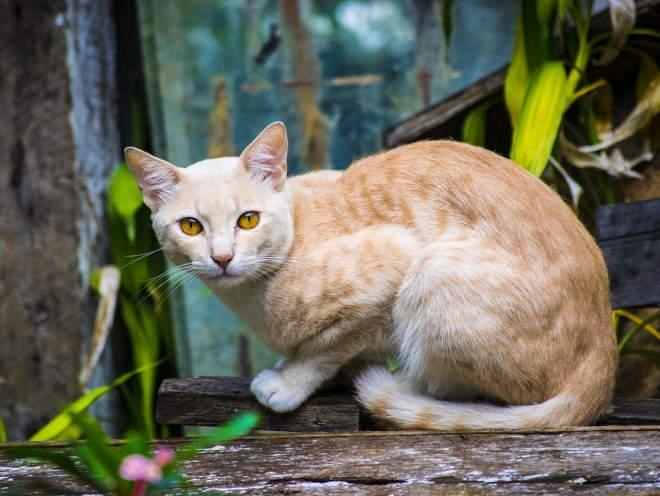 Кот сидит на деревянной лавке