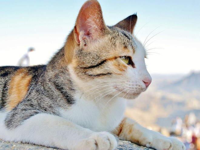 Кот отдыхает на свежем воздухе
