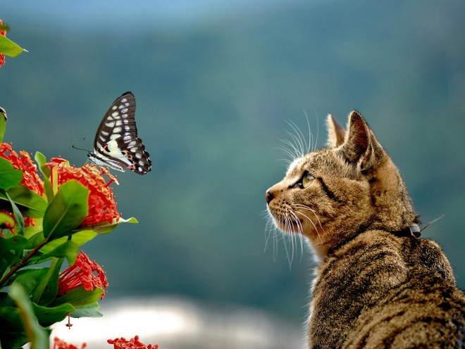 Кошка увидела бабочку