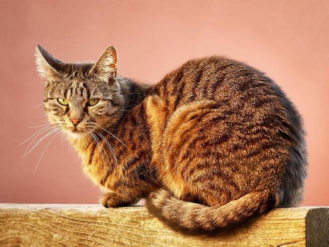 Кот сидит на бревне