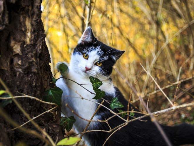 Кошка сидит у дерева
