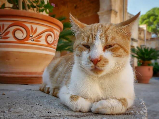 Кошка отдыхает во дворе дома
