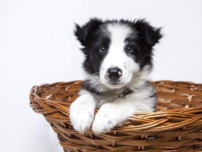 Собака сидит в своей корзине