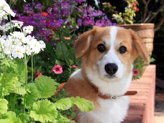 Собака сидит среди цветов