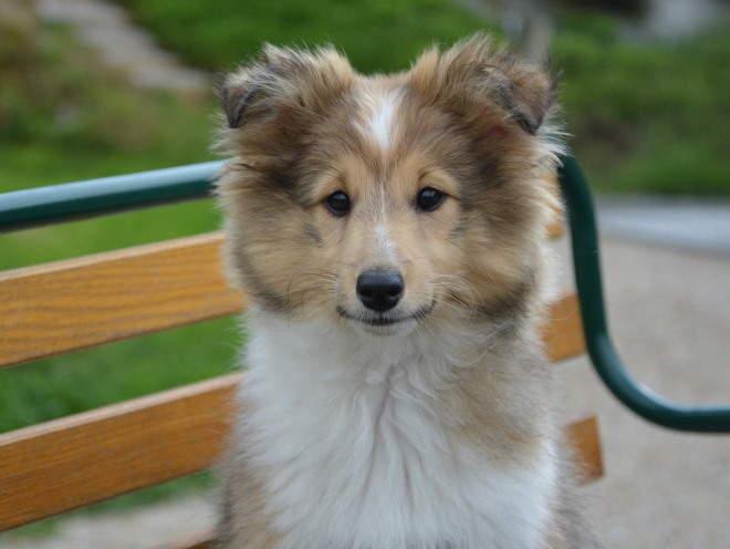 Собака сидит на скамейке