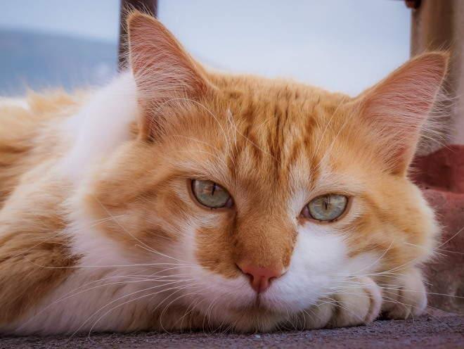 Кот утомился и лежит