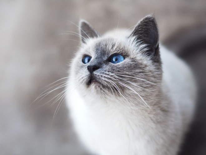 Кот задрал голову наверх и смотрит