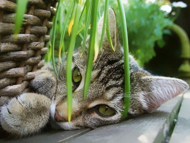 Кот лежит под цветком