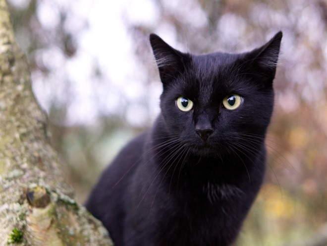 Кот сидит на дереве