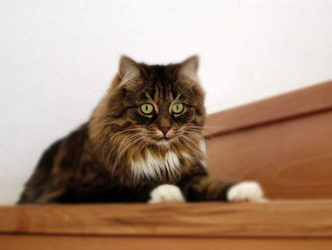 Кот забрался на шкаф