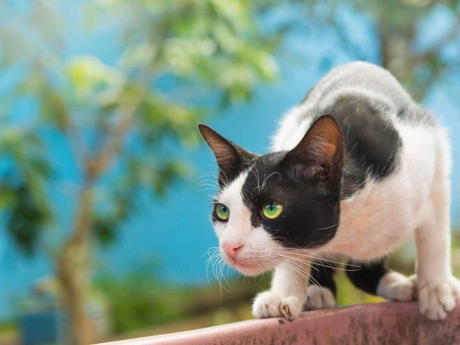 Кошка крадется по забору